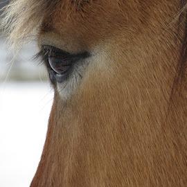 The Beauty ~ by Elizabeth Donovan-Jenkins - Animals Horses ( ranch, animals, horse, equestrian, eyes )