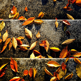 Autumn Leaves by Leka Huie - Nature Up Close Leaves & Grasses (  )