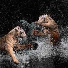 by Yohana Waty - Animals Lions, Tigers & Big Cats