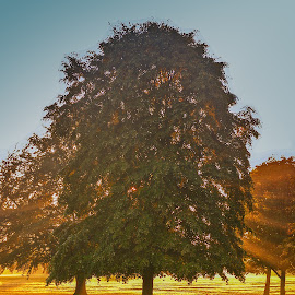 Sunrise by Darren Whiteley - City,  Street & Park  City Parks ( park, tree, oak, sunrise, rays,  )