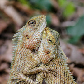 LOVE by Vivek Hegde - Animals Reptiles ( love, reptiles, animals, lovers, loving, reptile, animal )