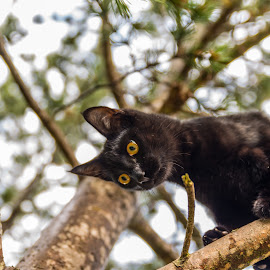 My little cat playing in the tree by Dan Westtorp - Animals - Cats Playing