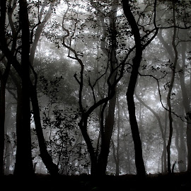 A foggy morning  by Bernet Benn - Novices Only Landscapes ( canon eos 1100d, handheld, fog, matheran, morning )