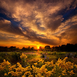A Peaceful Easy Feeling by Phil Koch - Landscapes Sunsets & Sunrises ( vertical, photograph, farmland, yellow, leaves, photooftheday, love, sky, tree, nature, autumn, bestoftheday, flower, instagood, follow, orange, twilight, agriculture, horizon, portrait, environment, dawn, serene, trees, floral, wisconsin, natural light, landscape, phil koch, spring, photography, sun, farm, horizons, inspired, clouds, office, park, green, scenic, morning, shadows, wild flowers, field, picoftheday, red, blue, sunset, peace, fall, meadow, landscapephotography, summer, earth, sunrise, landscapes,  )