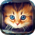 App Cute Cats Live Wallpaper APK for Kindle