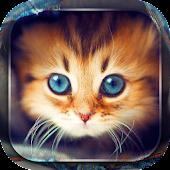 Niedliche Kätzchen Hintergrund