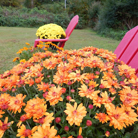 MOTHER IN LAW'S GARDEN by TONY LOPEZ - Flowers Flower Gardens ( different, chairs, colorful, patio, flowers, spring, garden,  )