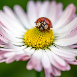 Get on top by Marius Turc - Animals Insects & Spiders