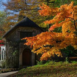 Autumn Colours, Stourhead, England by Mike Hayter - Nature Up Close Trees & Bushes ( england, stourhead, autumn, trees, colours )
