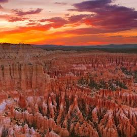 Pinnacle | Bryce Canyon by Brandon Ku - Landscapes Caves & Formations ( national park, sunset, stone, hoodoo, hoodoos, bryce canyon )
