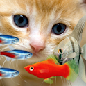 KITTY & FISH LIVE WALLPAPER#11