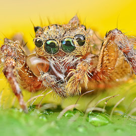 by SweeMing YOUNG - Animals Insects & Spiders (  )