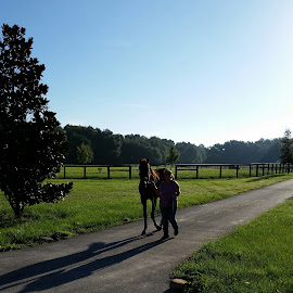 Early morning  by Starry Acres - Animals Horses