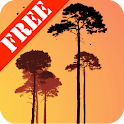 Misty Forest Free icon
