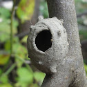 Potter Wasp's Nest