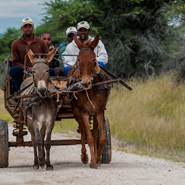 Donkey Cart by Johan Jooste Snr - Transportation Other ( farm, road, donkey cart, people, namibia )