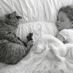 Asleep by Amanda Hunter - Babies & Children Children Candids ( cat, curl, white, sleep, black,  )