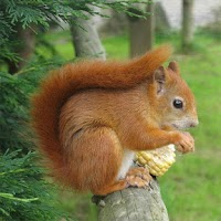 Screenshot of Squirrels Jigsaw Puzzles