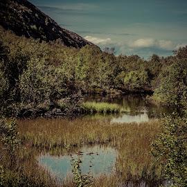 Arctic forest by Roy Friskilæ - Landscapes Forests ( friskila, friskilae, kirkenes, nikon, finnmark, norway )