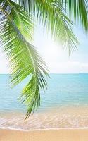 Screenshot of Tropical Beach Live Wallpaper