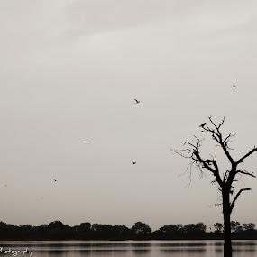 Landscapes by Pratik Patel - Uncategorized All Uncategorized (  )