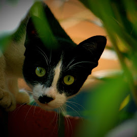The Look by Vijayanand K - Animals - Cats Playing ( cat, curious cat, black cat, animal )