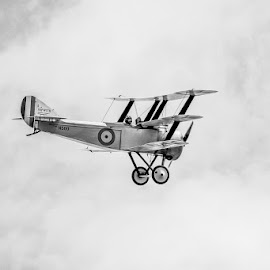 Sopwith Camel by Kevin North - Transportation Airplanes ( wing, camel, ww1, plane, sopwith, pilot, aircraft )