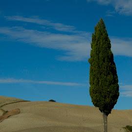 Toscana by Francisco Diniz - Landscapes Prairies, Meadows & Fields
