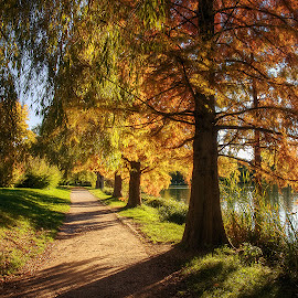 Autumn Walk pt.III. by Zsolt Zsigmond - City,  Street & Park  City Parks ( hdr, autumn, fall, path, trees, morning, light )