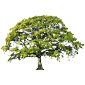 Oak Tree Spring Sticker icon