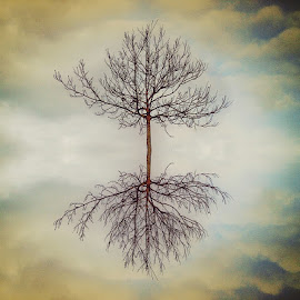 by Ksenija Glavak - Nature Up Close Trees & Bushes (  )