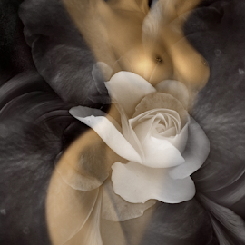 Temptation by Carmen Velcic - Digital Art People ( abstract, body, girl, nude, woman, roses, she, lady, flowers, digital )