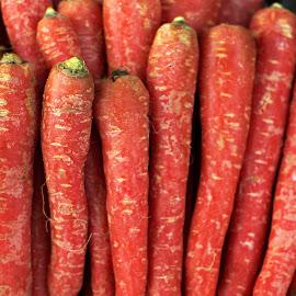 Carrots by Prasanta Das - Food & Drink Fruits & Vegetables ( fresh, carrots, harvest )