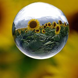 Sunflowers Through a Different Lens~ by Karen McKenzie McAdoo - Digital Art Places