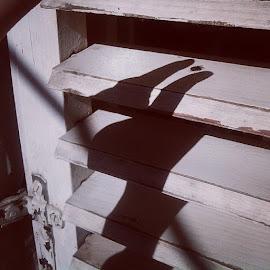 Ha! Shadow's catch... by Katarina Papic - Instagram & Mobile Android ( senke, window, shadow, lovim, catch, bnw, musice )