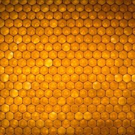 HONEYCOMB! by Sara Sawatzki - Nature Up Close Hives & Nests