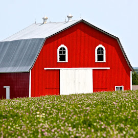 Red Barn by Ernie Easter - Buildings & Architecture Other Exteriors ( new brunswick canada, farms, barns )