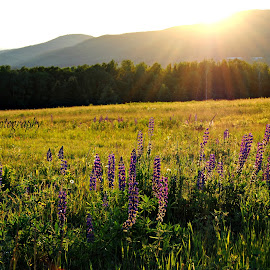 Down in the Valley  by Shelby Voisine - Landscapes Prairies, Meadows & Fields ( mountains, sunset, feilds, hils, valley, flowers, pretty )