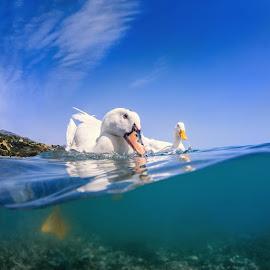 Ducks in the sea by Dmitry Laudin - Animals Sea Creatures ( sea split, greece, ducks )