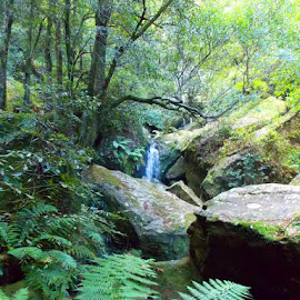 Forest scene by Annette Gregory - Landscapes Forests ( waterfall, forest )