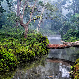 Natural bridge by Avishek Naidu - Landscapes Forests ( #dooars, #stream, #greenery, #tree, #forest,  )