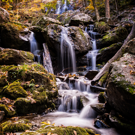 Dark Hallow Falls by Kevin Egan - Nature Up Close Water ( water, waterfalls, nature, color, nature up close, dark hallow falls, shenandoah national park,  )