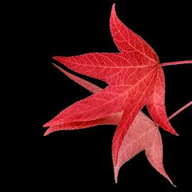 Fire Leaf by Nico Carbajales - Digital Art Things
