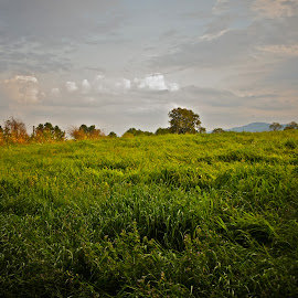 Berkshire Landscape by Alexis Picheny - Landscapes Prairies, Meadows & Fields