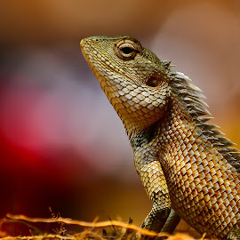 Bold! by (GG) Girinath G - Animals Other ( lizard, nature, wildlife, nikon, lens, photography )