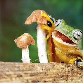 I'm Happy by Tele Nicotin - Animals Amphibians ( animals, frog, funny, smile, mashroom )