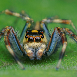 JS by Marcus Kam - Animals Insects & Spiders