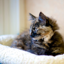 Torti waiting at the shelter by Martha Pope - Animals - Cats Kittens ( kitten, cat, shelter, tortoiseshell kitten, torti, adopt, foster, rescue )