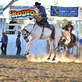 Beautiful Horse Rodeo style by Linda Taylor - Novices Only Sports ( cowboy, qld, riding, australia, toogoolawah, horse, sports, rodeo, bucking, animal,  )