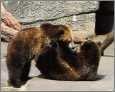Bären beim Kuscheln - Tierliebe gross geschrieben